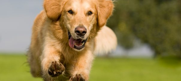 Is Your Dog Happy and Healthy?