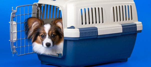 Pet Travel: Advice for Travelling with a Nervous Pet