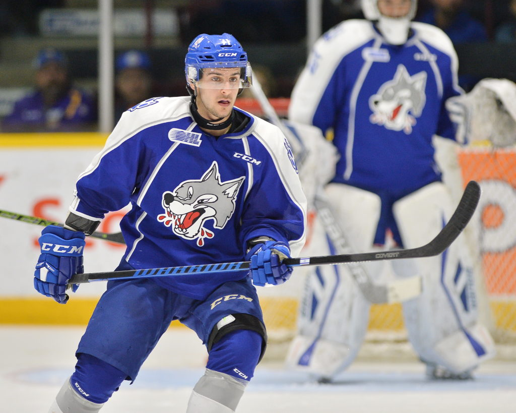 David Levin of the Sudbury Wolves. Photo by Terry Wilson / OHL Images.