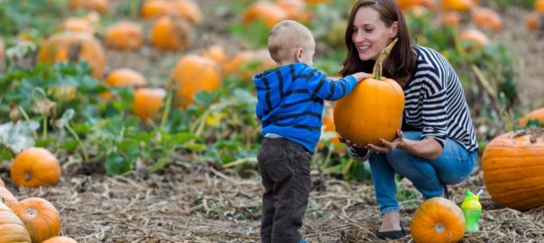 Pumpkin Patches You Need To Visit With Your Family